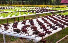 Vegetable plot Stock Photos