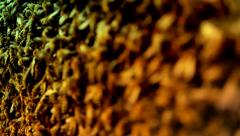 Brown and Yellow Honeybees swarming on Honeycomb Background HD Stock Footage