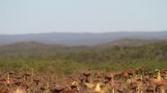 Birds Flying Through Sunflower Fields Stock Footage