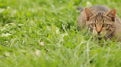 Cat in grass - stock footage