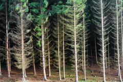 renewable resource forest - stock photo