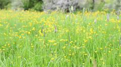 Summer meadow with biker in the background Stock Footage