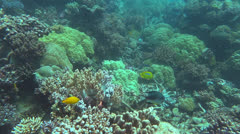 Coral garden Stock Footage