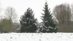 Snowy Conifers in Winter Park - stock footage