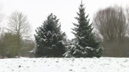 Stock Video Footage of Snowy Conifers in Winter Park