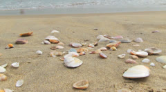 Shells on the beach Stock Footage