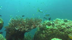 Acopora coral and reef fish Stock Footage