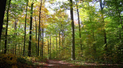Autumn Forest - Nature HD 1080 - stock footage