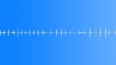 Rainforest Ambience Sound Effect