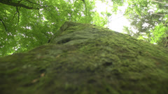 Moss stone with wood Stock Footage