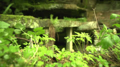 Mystic place with grass an old stones 200fps Stock Footage