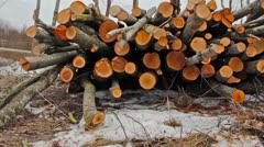 Felled trees, shooting slider Stock Footage