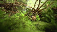 Snail in the gras in slow motion (200fps) Stock Footage