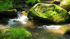 The river runs over boulders in the primeval forest - stock footage
