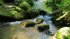 The river runs over boulders in the primeval forest Stock Footage