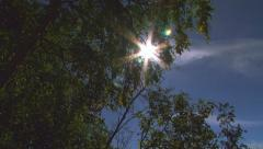 Sun Flare Looking Upwards through Tree Leaves Jib Pan 2 - wider Stock Footage