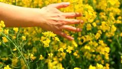 Woman's Hand Caressing Grass Summer Concept Slow Motion Background HD Stock Footage