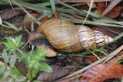 The gastropod in the garden. Stock Photos