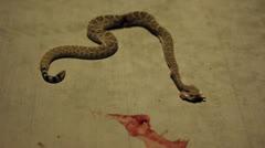 Twitching Rattlesnake Stock Footage