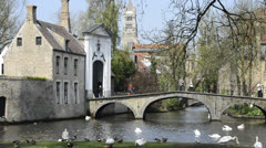 Swans and ducks near the canal in Bruges, Belgium Stock Footage