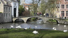 Swans, ducks and excursion boat near the canal in Bruges, Belgium Stock Footage