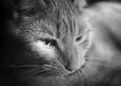 Relaxing kitty Stock Photos