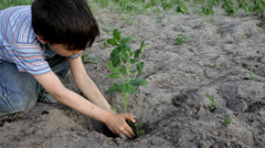 Boy planting a tree Stock Footage