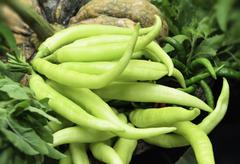 Stock Photo of green pepper