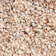 Background from shells in the sand Stock Photos