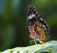 Beautiful butterfly on green leave Stock Photos