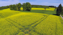 Rape field in spring Stock Footage