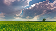 Rape field and dramatic sky, time-lapse Stock Footage