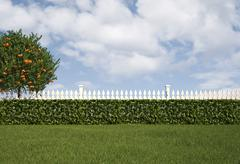 garden with fence and hedge - stock illustration