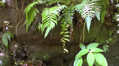 Fern and Water Stock Footage