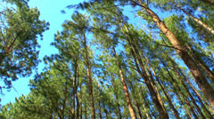 Pines and Sky Stock Footage