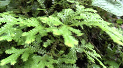 Micro enviroment Stock Footage