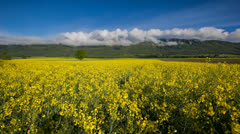 Rapeseed Field and Clouds Stock Footage