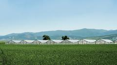 greenhouse plantation and cultivated land - stock photo