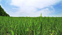 Green field and cloudscape time-lapse - stock footage