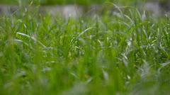 Move through grass Stock Footage