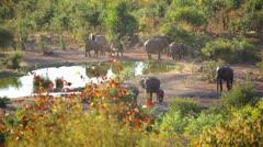 Elephant Waterhole 02 HD Stock Footage