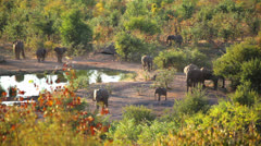 Elephant Waterhole 06 HD - stock footage