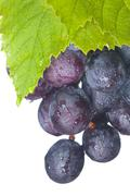 fresh grapes and green leaf - stock photo