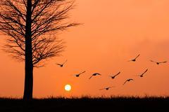 Linnut lentää aurinkoon. Kuvituskuvat