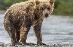 Stock Photo of bear cub