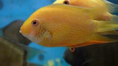 Fish - stock footage