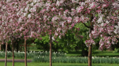 Spring Orchard Stock Footage