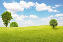 Green field and tree with blue sky and clouds - stock photo