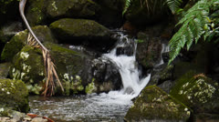 Creek - rocky water stream at El Yunque Tropical National Forest 3 Stock Footage