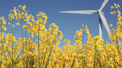 Natural energy concept with rapeseed and windmill Stock Footage